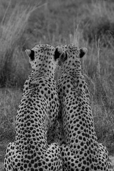 Zulu & Zephyr | Blog