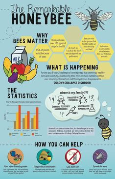 Why bees matter. Learn more about bees, honeybees, and our pollinators here with this Infographic.