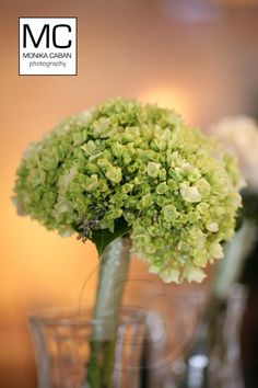 a nice bridesmaid option that could work with several different bridal bouquets. Bridesmaid Bouquet, Wedding Bouquets, Wedding Flowers, Bridesmaids, Green Hydrangea Bouquet, Wedding Stuff, Dream Wedding, Best Friend Wedding, Wedding Inspiration