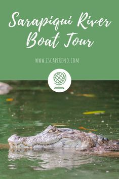 Taking a Sarapiqui River Boat Tour allowed us to see so many amazing wild animals. We couldn't believe all the cool things we saw! Including this caiman.   #CostaRica