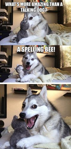 PUN DOG!!!!  Daily Afternoon Randomness (49 Photos)