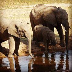 Il 14 ottobre siamo al Muse di Trento a presentare il nostro ecotour in Tanzania di dicembre #musetrento #muse_museum #ecotourism #tanzania #biosphaera #animals #africa #turismosostenibile