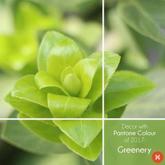The colour Greenery has been chosen as the #PantoneColourOfTheYear. So, here are some tips that we've carefully curated so you can incorporate this zesty hue in your home! #Pantone #Colour #homesweethome #homeinteriors #bedroom #bathroom #kitchen #living #study #pujaunit #mumbai #pune #chennai #hyderabad #bangalore #photography #colour #IndianInteriors #interiordesigners #india #lifestyleblogger