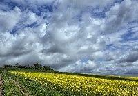 Pole, Rzepaku, Droga, Niebo, Chmury, Wiosna