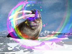 Rainbow puking walrus in motion