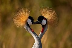 25 Most Beautiful Bird Photography examples and Tips for Photographers | Read full article: http://webneel.com/25-most-beautiful-bird-photography-examples-and-tips-photographers | more http://webneel.com/wildlife-photography | Follow us www.pinterest.com/webneel