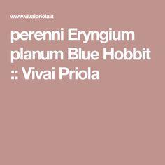 perenni Eryngium planum  Blue Hobbit :: Vivai Priola