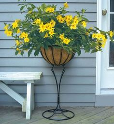 26 Flowers That Bloom All Year Round   Permanent Flowering Plants Bonsai Garden, Garden Planters, Potted Garden, Exotic Plants, Tropical Plants, Flowers Perennials, Planting Flowers, Container Plants, Container Gardening