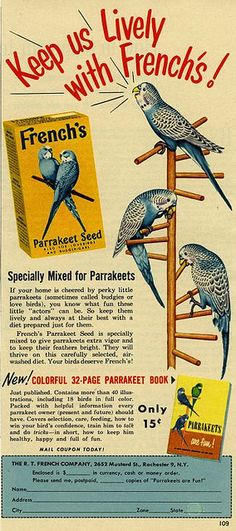 Parrakeets are fun!