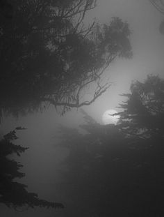 Dark Art Photography Nature Mists Ideas For 2019 Dark Photography, Black And White Photography, Wedding Photography, Beautiful Moon, Dark Places, Fantasy Landscape, Dark Art, Moonlight, Mists