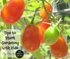 Now is the Time to start Gardening with Kids!  Simple Tips from a Mom of 3 to help you plug into nature and spend time exploring and learning in the natural environmental from The Educators' Spin On It