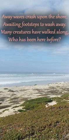 Away waves crash upon the shore, Awaiting footsteps to wash away. Many creatures have walked along, Who has been here before? Visit California, California Beach, Beach Poems, Thoughts And Feelings, Touring, Creatures, Waves, Outdoor, Outdoors