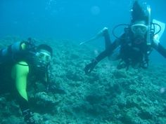 channel islands de californie | アポ山スーパー800: O2DIVE OKINAWA/旭潜水技研 ...
