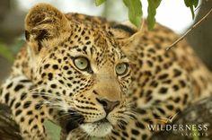 Wilderness Safaris - Botswana
