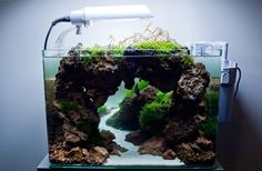 aquarium44:  Scaper's Tank Contest 2014. 2nd stagehttp://all4aquarium.ru/en/events/scapers-contest/2nd-stage7th place. Mystical CaveJean Francois Maillot (La Ville Du Bois, France)  Animals: Paracheirodon simulansPlants: Fissidens fontanus, Flame moss, Hemianthus callitrichoides Cuba, Riccardia chamedryfolia, Christmas moss, Polygonum sp. Sao Paulo, Hygrophila pinnatifida, Rotala macrandra, Hemianthus micranthemoides sp. Monte Carlo