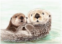 Nolon Stacey is a pencil artist specialising in detailed drawings of British wildlife, dogs and farm animals. Animal Paintings, Animal Drawings, Otter Tattoo, Baby Sea Otters, Otter Love, British Wildlife, Watercolor Animals, Cute Images, Cute Baby Animals