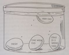 How to test if your eggs are fresh just with some water.