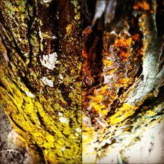 Two halves of on tree. #tree #color #ignation #hashtagrevolution #picoftheday #photooftheday #instagram #statigram #Instamood #instagood #webstagram #tx_ignation #bestoftheday #igers #igaddict #instahug #instagramers #instagramhub #iphone  #iphone3gs #jj #ig #lymenlee #instutorial #igerspescara #igersfollow