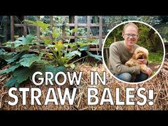 Do THIS to Kickstart a Weed-Free Straw Bale Garden! - YouTube Straw Bale Gardening, Gardening Tips, Sustainable Gardening, Urban Gardening, Old Farmers Almanac, Garden Projects, Garden Ideas, Pepper Plants