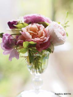 Roses de jardin (juin) photo de JL SCOTTO