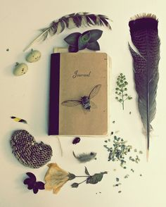 He Writes of Nature - 20x24 Fine Art Photography