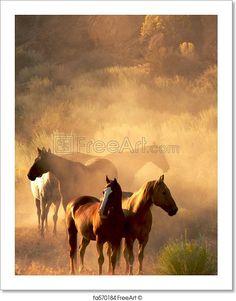 """""""Four horses standing in the desert in evening light"""" - Art Print from FreeArt.com"""
