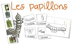 Sciences/Elevage : les papillons - Bout de gomme Science For Kids, Science Activities, Science Nature, Grade 2 Science, High School French, Kindergarten Stem, Bugs, Drawing Quotes, Home Schooling