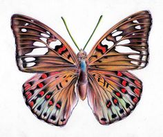 How to Draw a Butterfly http://www.artyfactory.com/drawing_animals/how-to-draw-a-butterfly/how_to_draw_a_butterfly.html