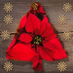 TV Work A poinsettia Christmas tree! Capture Red Carpet Looks with Pageant and Prom Dresses Article Poinsettia Tree, Christmas Poinsettia, 4th Of July Wreath, Instagram Feed, Cute Babies, Christmas Tree, Wreaths, Photo And Video, David