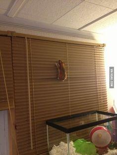 Prison Break: Hamster
