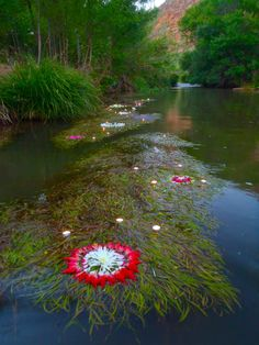 Ethereal floating flower mandalas, summer solstice ~ Oak Creek, Cornville, AZ by Kathy Klein, c.2012  #myt