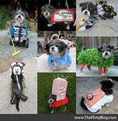DIY+Dog+Halloween+Costumes | The Flirty Blog: Let's talk about creativity