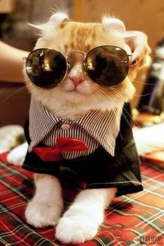 Fabulous looking cat with glasses.