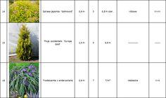 Glicynia - sztuka w ogrodzie - projektowanie, zakładanie, pielęgnacja