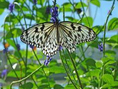 Fondo de Mariposa blanca y negra a resolucion 800x600
