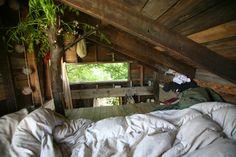 tree house. someday.
