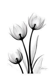 Resultado de imagen para imagenes tatuajes de tulipanes en blanco y negro