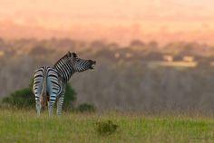 Frits Hoogendijk wildlife | Better Late Luxury