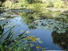 Lago do Jardim das Águas, na residência do Monet, em Giverny.