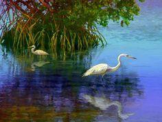 Herons in Mangroves