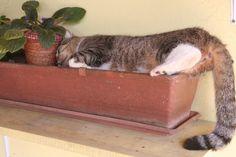 Flower pot sleeping cat