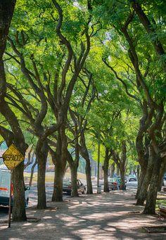 Parque Rodó, Montevideo. Uruguay