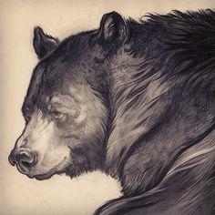 Cory Godbey, bear illustration