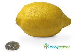 14 Semanas. Tu bebé mide desde la cabecita hasta el final de la espalda un poco más de 3,5 pulgadas (9 centímetros). Tiene, más o menos, el largo de un limón amarillo. #embarazo #desarrollofetal