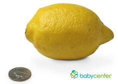 14 weeks: Your baby, now as long as a lemon, weighs about 1 1/2 ounces. (Length: 3 1/2 inches, head to bottom.) @babycenter #howbigisyourbaby #pregnancy