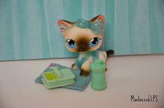 Cute Shorthair Cat #5 <3