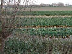 Spruitenvelden