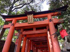 Os toriis do Santuário de Fushimi Inari são guardados por estátuas de raposas. Elas são mensageiras e protetoras. Há várias raposas por todos os lugares. ---------- The toriis of the Fushimi Inari Shrine are guarded by statues of foxes. They are messengers and protectors. There are several foxes everywhere. ---------- #kyoto #fushimiinari #japao #japanese #japan #viagem #trip #travel #viaje #instatravel  #travelgram #igtravel #beautifulplace #traveladdict #traveltheworld #travelphotography…