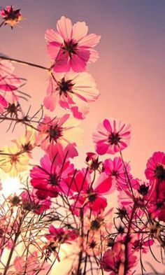 Pink Flower Sunset