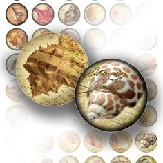 Vintage sea shell digital collage bottle cap size 1 inch circle for jewelry making paper supplies digital download
